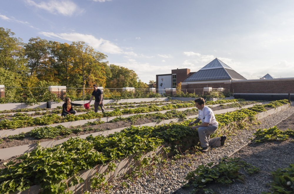 Edible gardens on the Hyde Park campus of the CIA.