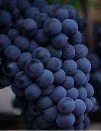 CIA Wine and Beverage Graduate Certificate | Video