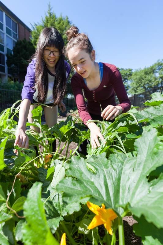 teaching-garden-PM_20160630_Garden_221