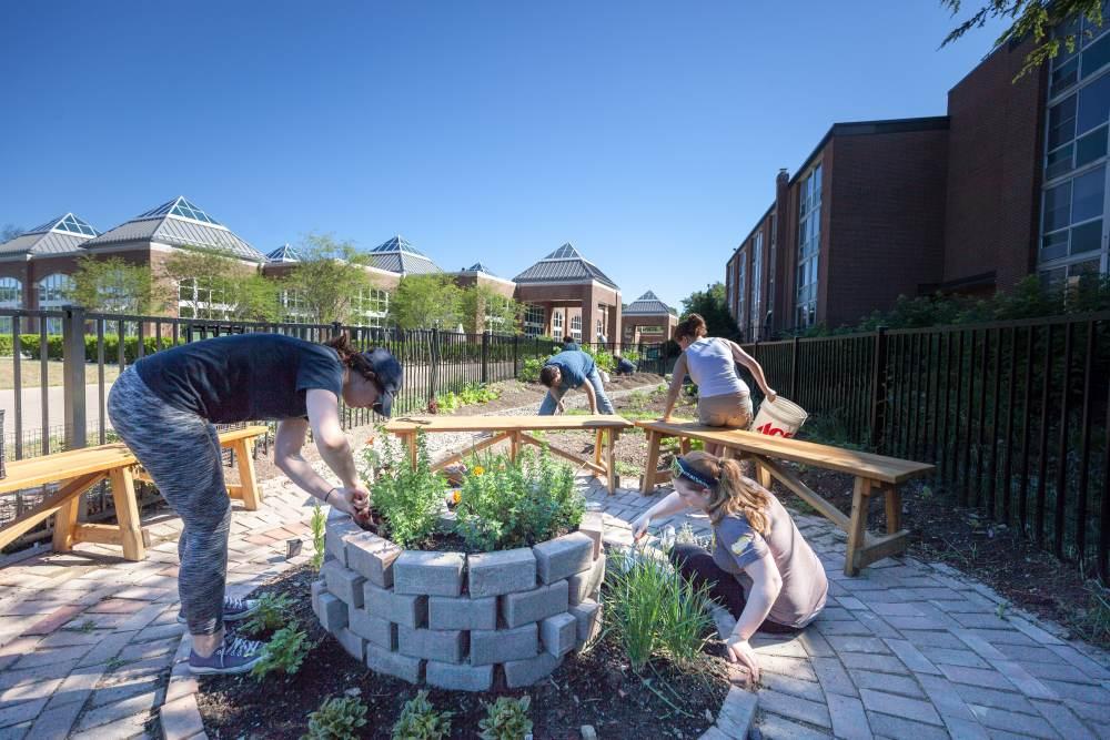 teaching-garden-PM_20160630_Garden_306