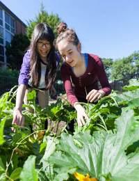 teaching-garden-featured