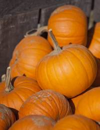 4 Adult Pumpkin Recipes Featured