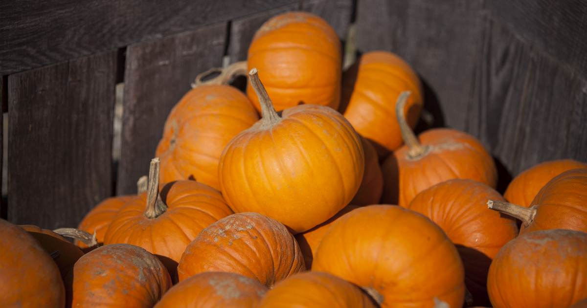 4 Adult Pumpkin Recipes OG
