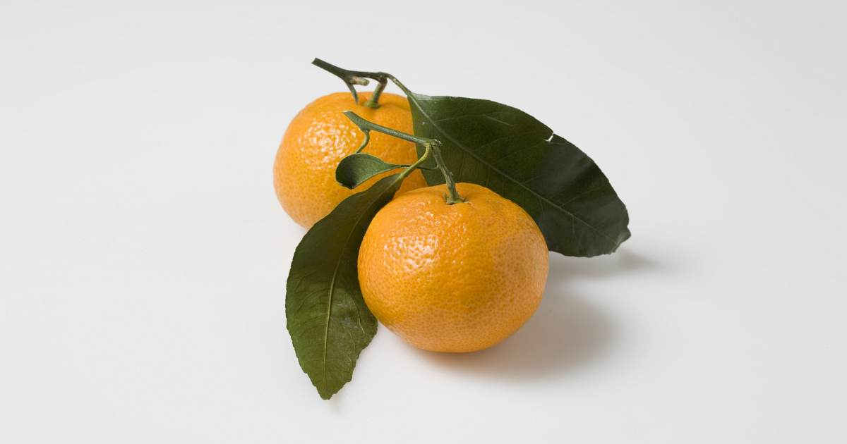 cook from your fridge orange