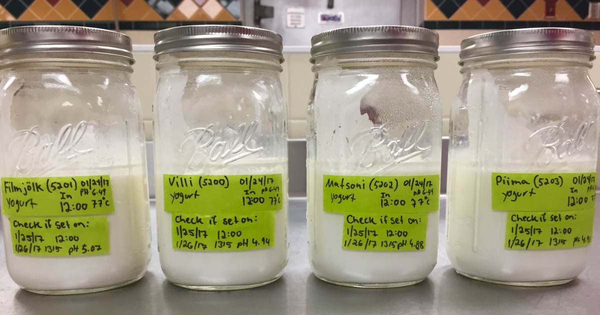 the culinary science kitchen yogurt og