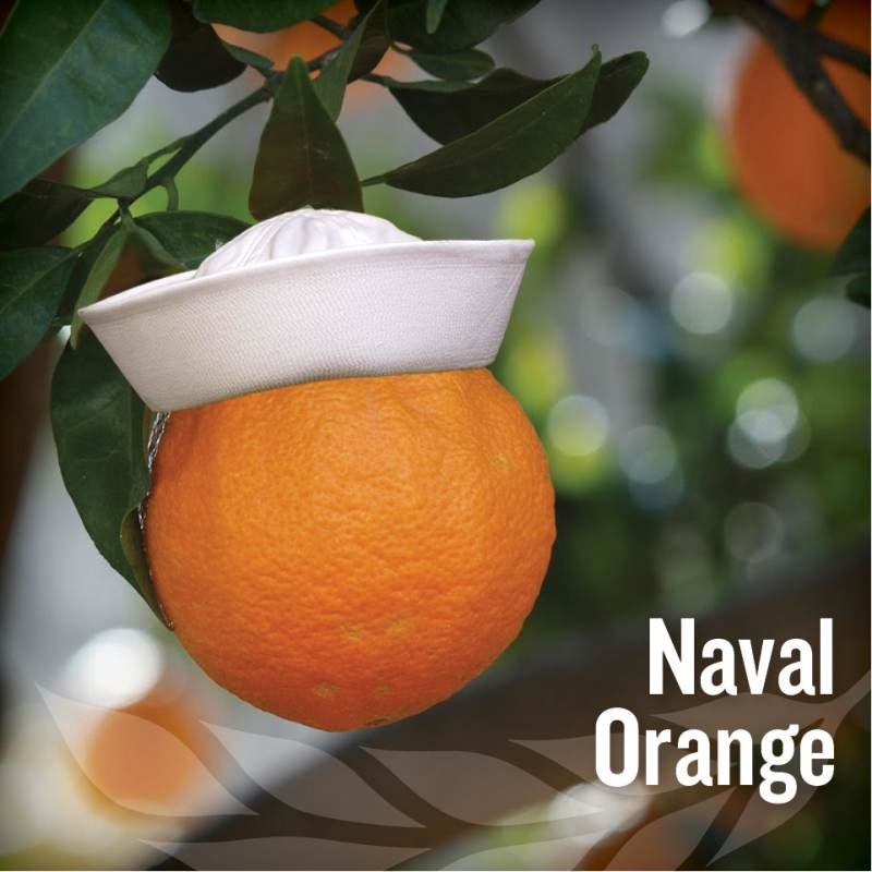 fathers day - Naval Orange