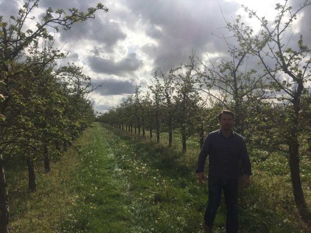 France 5 Apples