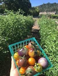 My CIA Farm-to-Table Concentration Experience