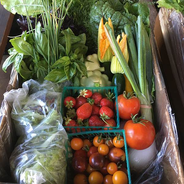 farm to table produce