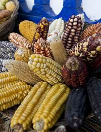 Corn and Human Skulls: Anthropology of Food