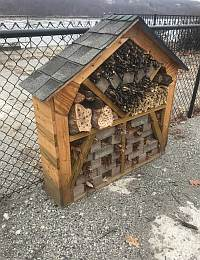 News From the Hive: Rooms for Rent at the Pollinator Hotel