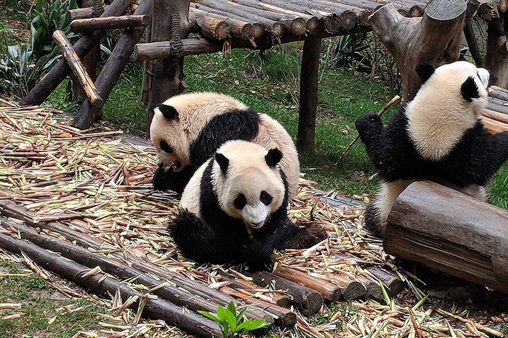 china-trip-best-photos-5 image