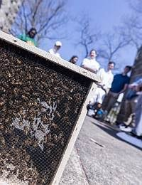 News from the Hive: The Bees Arrived!