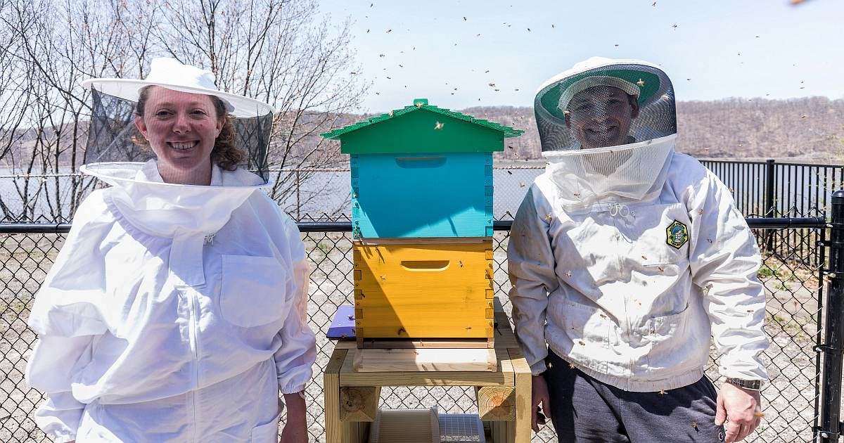 hive news bees arrived og image