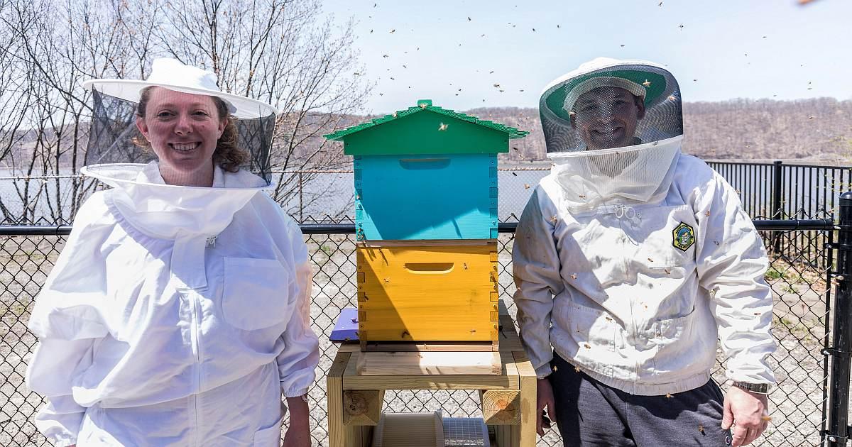 hive news bees arrived og image