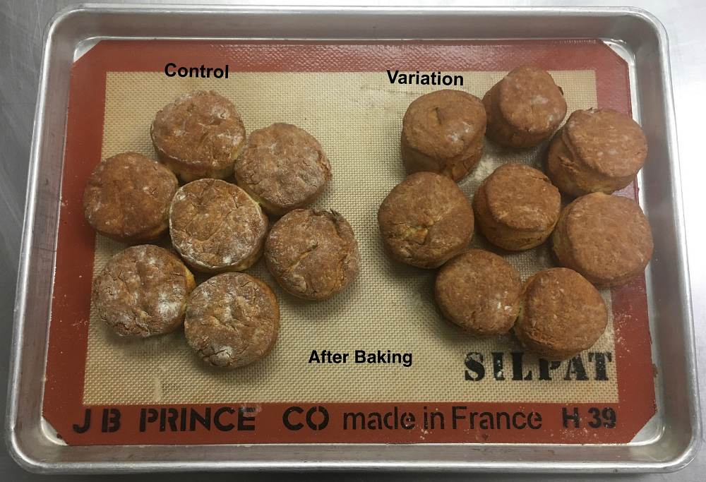CIA Culinary Science student experiments comparing biscuits made with butter vs. shortening.