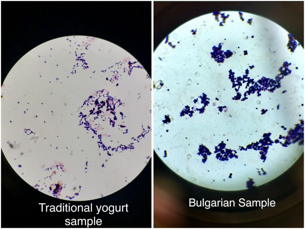 Traditional Yogurt Sample vs Bulgarian Sample with agar