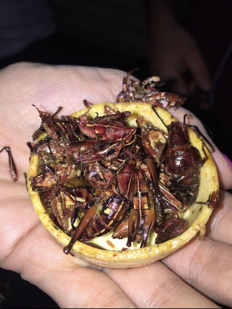 CIA students in the Latin American Cuisine Concentration try crickets & mosquitoes